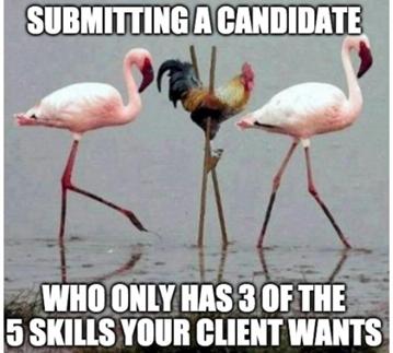 recruiting memes flamingo